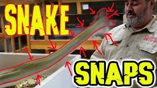 Amazing pet Snake almost gets me by the end (NOT CLICKBAIT ) lol