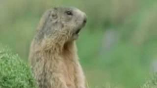 Tiere singen und sprechen Englisch