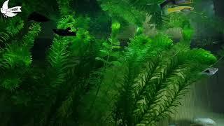 Sleep Music | Fish Aquarium | Relaxation | Jazz