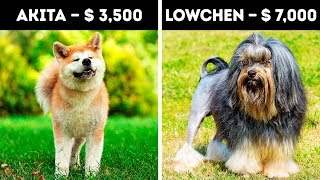 20 Incredibly Expensive Dogs That Only 5% Can Afford