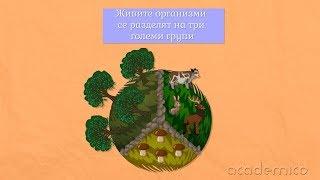 Разнообразие и групиране на организмите - Човекът и природата 3 клас | academico