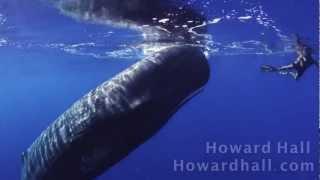 Trop trop belle vidéo d'une baleine et un homme
