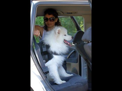 Auto Sicherheitsgeschirr für Hunde | Sicherheit für Hunde im Auto