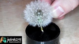 Dandelion in Resin / RESIN ART