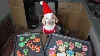 Dog Makes Christmas Cookies: Funny Dog Maymo