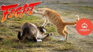 KARATE CATS! EPIC Funny cats Fighting videos  😸  - TRY NOT TO LAUGH compilation (2019) 😻