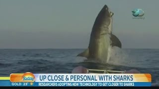 Video of The Biggest Shark Ever Leaves News Anchor Speechless
