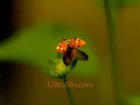 One more 7000 FPS lady bug.