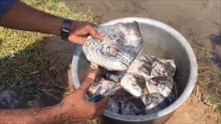 Cooking 9  Big Fish Heads in My Village - Cooking Big Fish Heads with Raw Mango - Head Curry