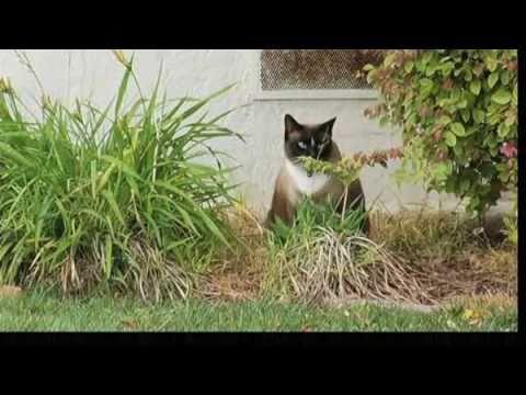 Dusty the Cat Burglar