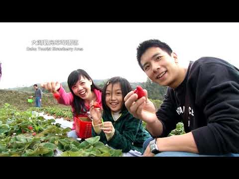 Miaoli travel-The Hot Spring and Fruit Picking
