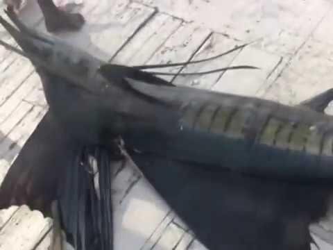 fishing парусник рыбалка мальдивы парусник