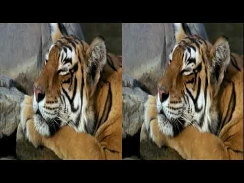 Nature & Animals 2 3D SBS