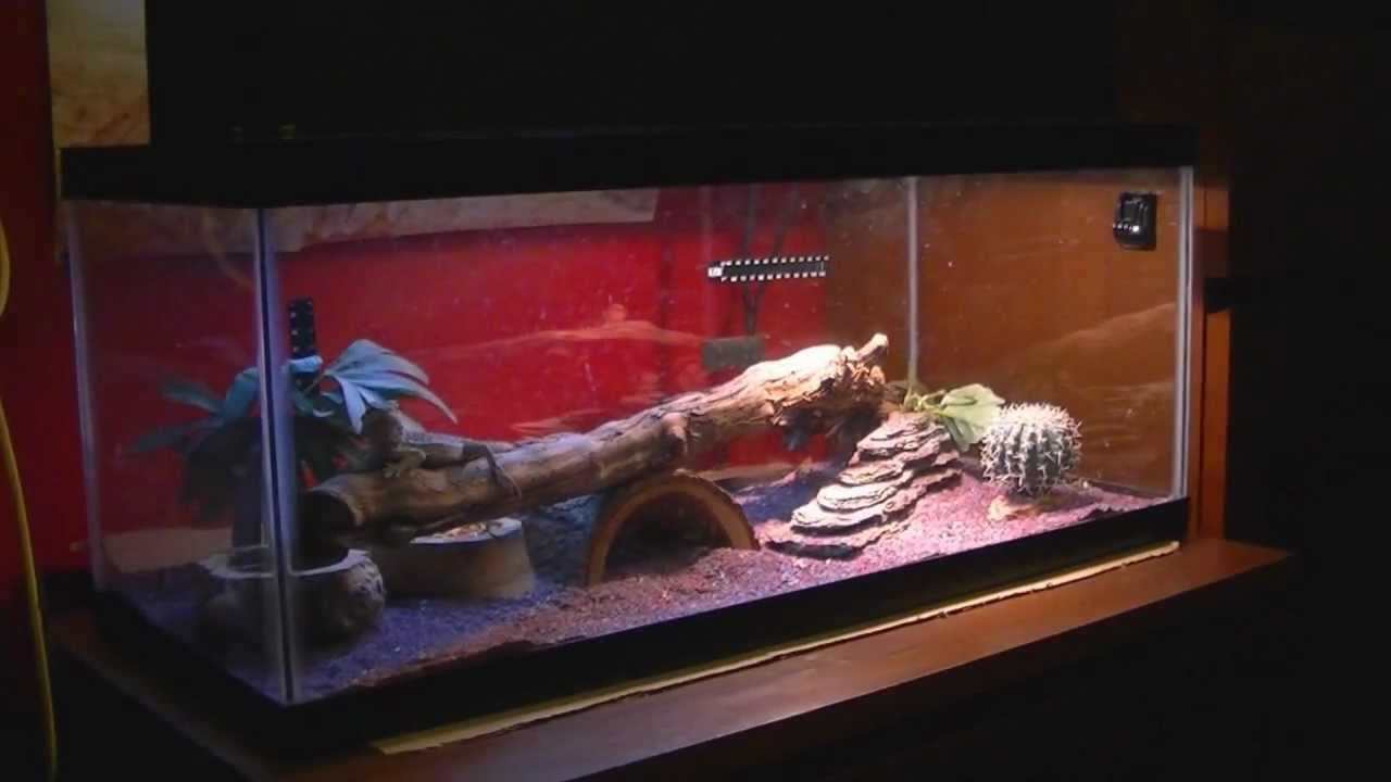 20 Gallon Aquarium Bearded Dragon My Bearded Dragon Tank