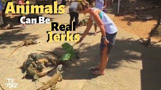 Animals can be real Jerks | Tip Top Tube