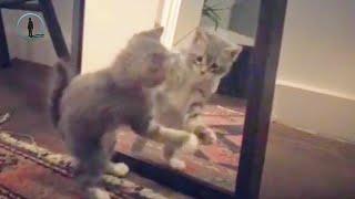 Ocak Top 20 Kediler VS Aynalar 🐈 Komik Kediler 2019 #bluesky