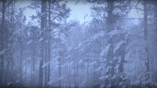 ARCTIC BLIZZARD | Storm White Noise For Relaxation & Sleep | 10 Hours - NO ADS