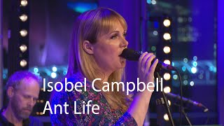 Isobel Campbell performs Ant Life live   Quay Sessions
