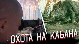 Охота на кабана и волка с Pulsar Digex