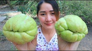 Yummy Goose Egg Cooking Chayote Recipe - Chayote Stir Fry Goose Egg- Cooking With Sros