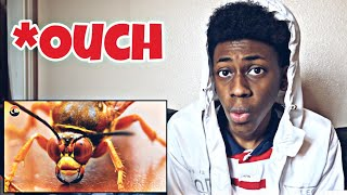 STUNG by a CICADA KILLER! | REACTION VIDEO!