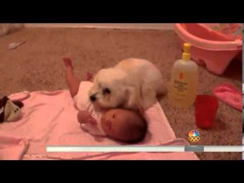 Adorable puppy protects baby from blow dryer