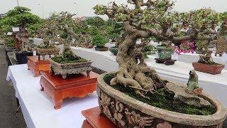 Top 500 cây bonsai mini đẹp nhất việt nam triển lãm đẳng cấp cao