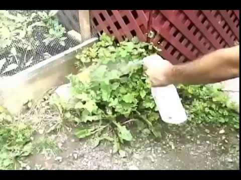WeedKleenTM by EcoSaveEarth - Weed Killer Made from Organic Ingredients (Vinegar & Lemon juice)
