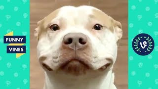 /try not to laugh cute funny animals of the week