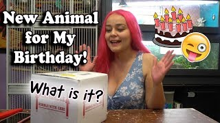 New Pet for My Birthday!!! Unboxing Live Animal | About Shipping Pets