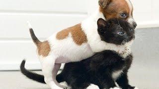 Video Hài - Clip Hài Cười bể bụng - Clip Vui Chết cười vì Chó với Mèo