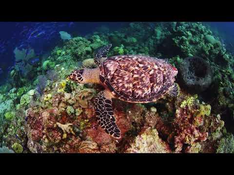 Stream2Sea Reef-Safe & Ocean-Friendly…