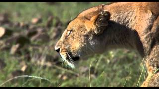 Video Clip: 'Hunters Being H...