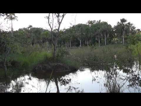 Baixar Natureza, canto de pássaros, lagoa das buritis, relaxamento,