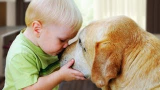 Dogs and Babies are Happy Together Compilation