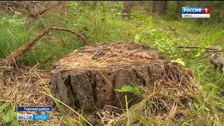 В Тарском районе продолжают орудовать черные лесорубы