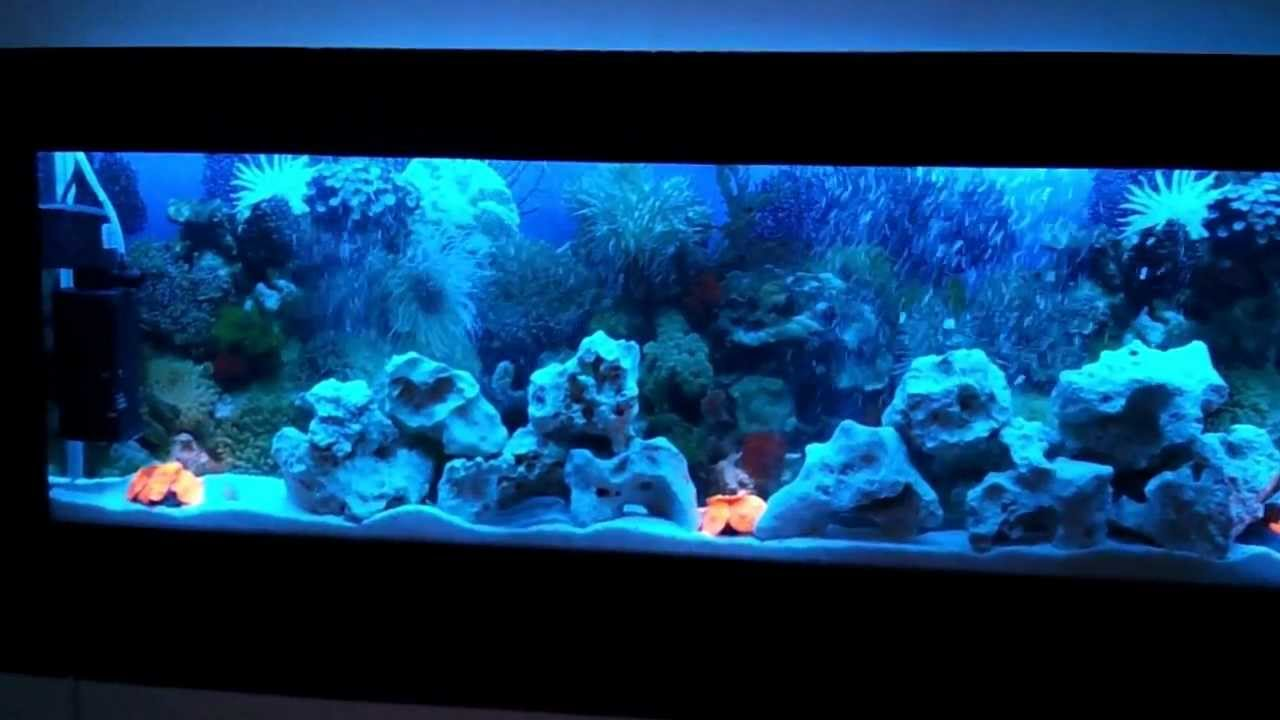 Luxury Wall Mounted Fish Tank Aquarium Www