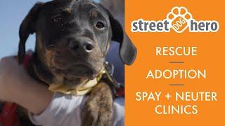 Street Dog Hero Partnership