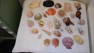 Muriatic Acid Wash on Seashells