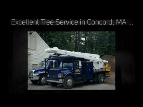 Tree Removal Concord, MA Pruning Trimming