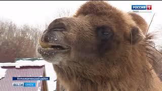 Обитатели Большереченского зоопарка встречают весну