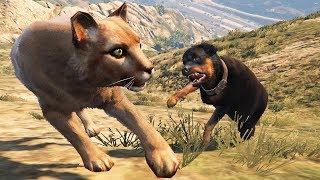 الكلب شوب ضد نمر الجبال شاهد من سيفوز في لعبة جي تي أي 5 | GTA V ...
