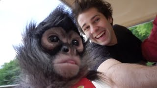 MEETING A MONKEY!! | David Dobrik