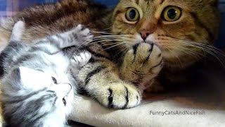 Top Playing and Dancing Cats and Kittens videos