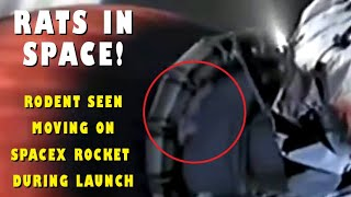 A video of looks like mouse moving on SpaceX rocket after ..