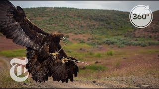 Soar With a Golden Eagle | The Daily 360 | The New York Times