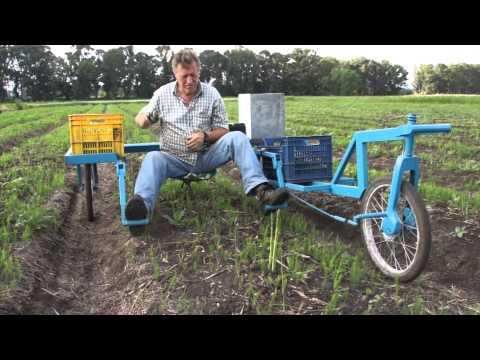 Raccogliere asparagi finalmente meno faticoso for Di raimondo macchine agricole