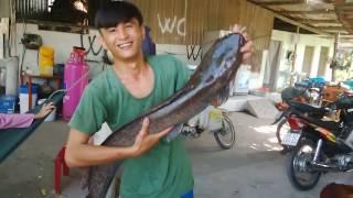 0186 Mr Bin câu cá từ sáng đến chiều mới giật được cá khủng trong ao nhà