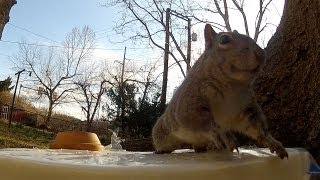 "Nervous Squirrel says ""Bombs Away!"""
