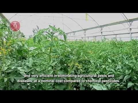 فيلم وثائقي جديد: الزراعات العضوية الفلسطينية: مصلحة بيئية-وطنية أم حلم طوباوي؟